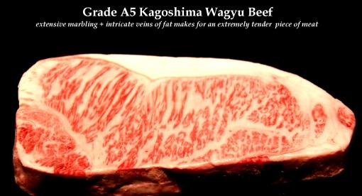 A5 KAGOSHIMA